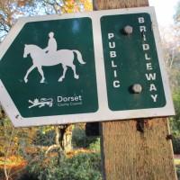 Forest dog walk near Puddletown, Dorset - dog walk places in Dorset.JPG