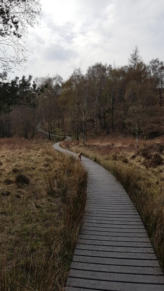High Dam dog walk, Cumbria - 20190415_154012.jpg