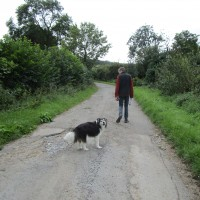 Dog-friendly pub and dog walk near Leyburn, North Yorkshire - Yorkshire dog-friendly pub and dog walk