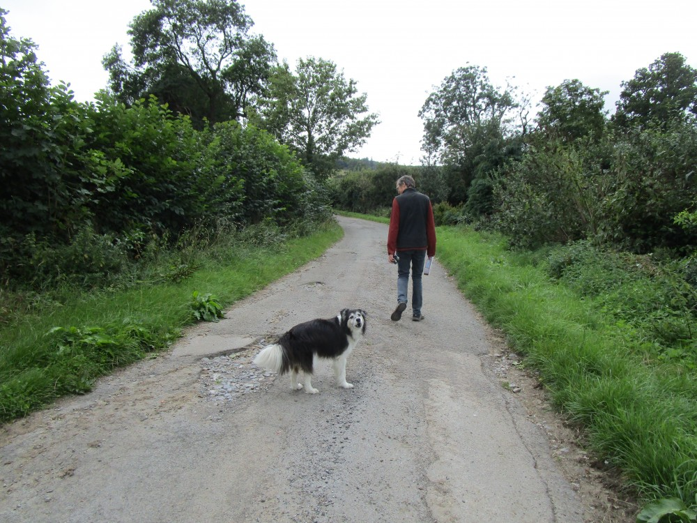 Dog-friendly pub and dog walk near Leyburn, Yorkshire - Yorkshire dog-friendly pub and dog walk