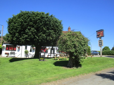 A420 dog walk and dog-friendly pub west of Oxford, Oxfordshire - Driving with Dogs