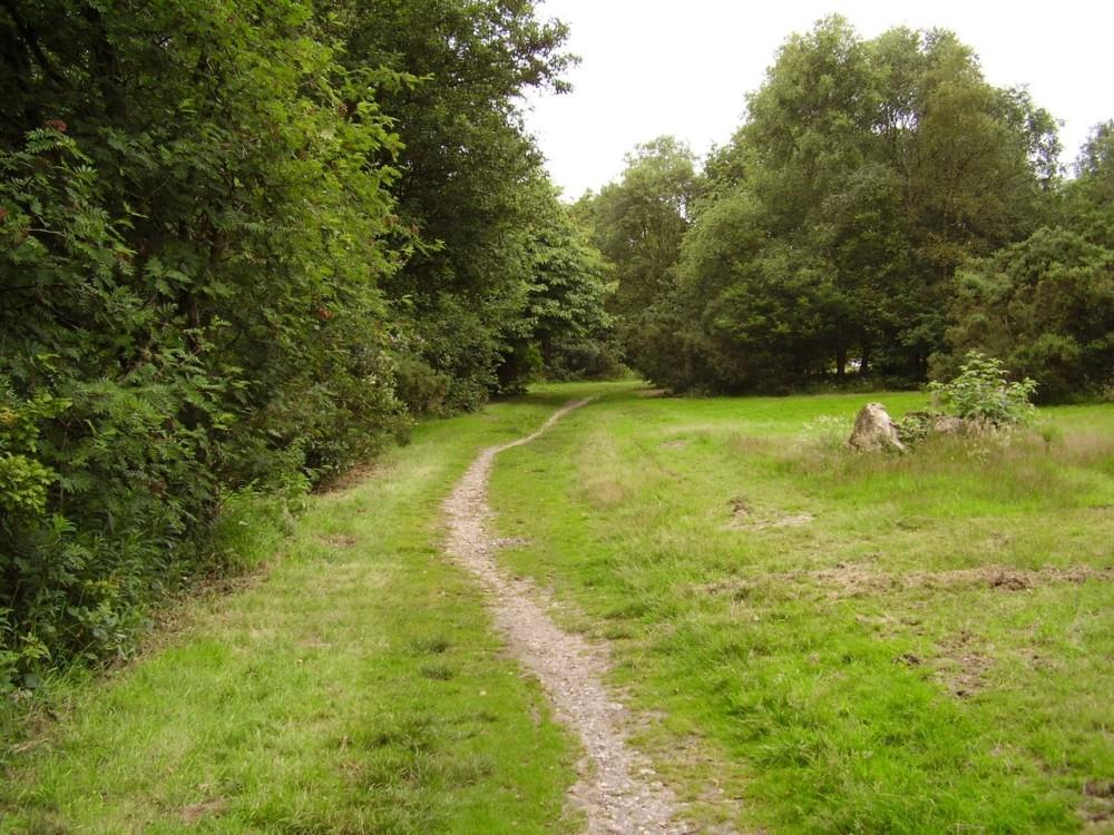 M6 Junction 15 woodland dog walk, Staffordshire - Dog walks in Staffordshire