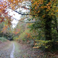 Forest dog walk near Puddletown, Dorset - dog walk places in Dorset.JPG