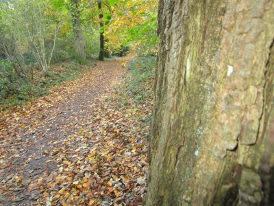 A35 woodland dog walk and literary trail, Dorset - Driving with Dogs