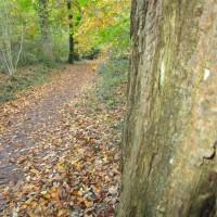 A35 woodland dog walk and literary trail, Dorset - IMG_6512.JPG