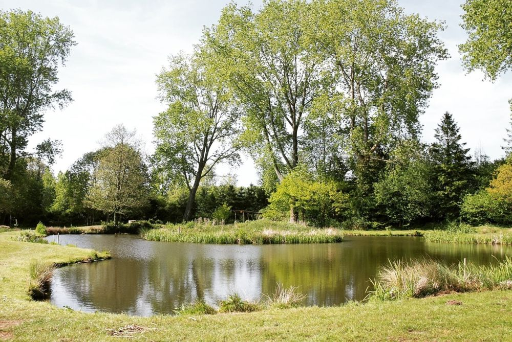 A367 dog walk with lots to see and a dog-friendly pub, Somerset - Somerset dog walks.jpg