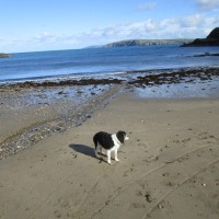 Stunning dog walk and dog-friendly beach, Pembrokeshire, Wales - IMG_5881.JPG