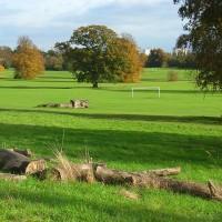 Prospect Park dog walk, Berkshire
