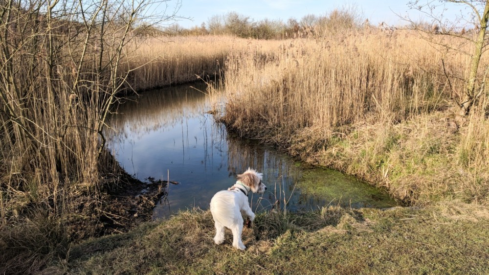 M62 J.7 Dog Walk at Sutton Manor Woodlands (The Dream Sculpture), Merseyside - IMG_20180224_144124.jpg