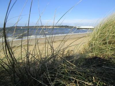 Bramblebush dog-friendly beach, Dorset - Driving with Dogs
