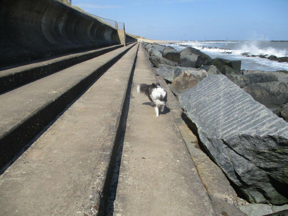 Sea Palling dog-friendly beach, Norfolk - Norfolk dog-friendly beaches.JPG
