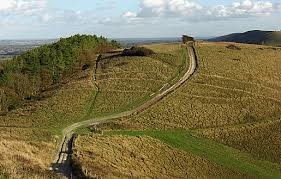 Dog walk on the Down, West Sussex - harting-down.jpg