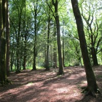 Woodland dog walk and estate walks, Devon - IMG_2831.JPG