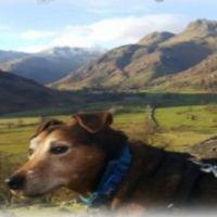 A66 dog-friendly pub and dog walk near Kendal, Cumbria - Toby-dog walks near Kendal.jpg