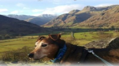 A66 dog-friendly pub and dog walk near Kendal, Cumbria - Driving with Dogs