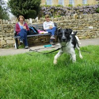 A44 dog-friendly pub and dog walk near Moreton-in-Marsh, Gloucestershire - Dog walks in Gloucestershire