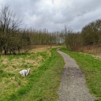Local Dog Walk: Wheatacre Woods, Lancashire - IMG_20200307_142745.jpg