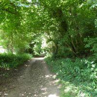 Dog walk in the forest near Helmsley, North Yorkshire - Yorkshire dog walks