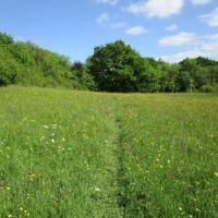 A356 A stroll to Piggy Village, cafe and dog-friendly B&B, Dorset - Wildflower footpath.jpg