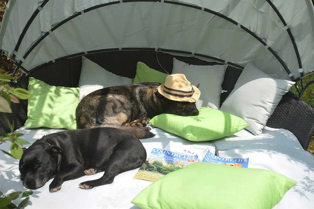 Quantock Cottages - dog-friendly, Somerset - zzz.jpg