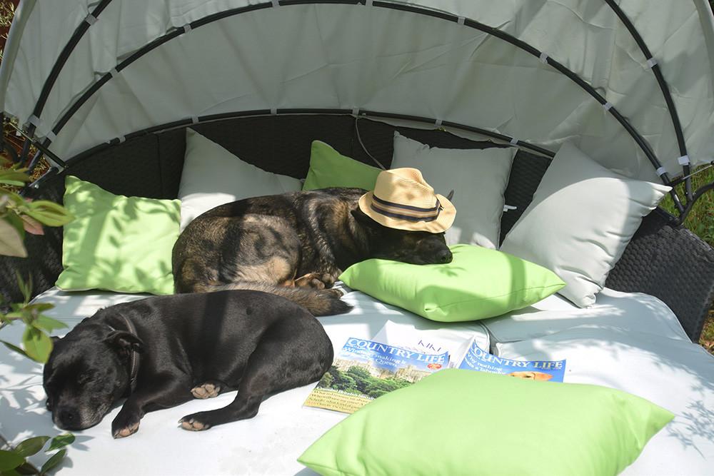 Quantock Cottages - dog-friendly, Somerset - zzz.jpg
