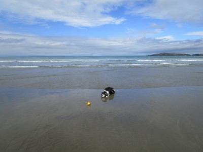 Poppit dog-friendly beach near Cardigan, Wales - Driving with Dogs
