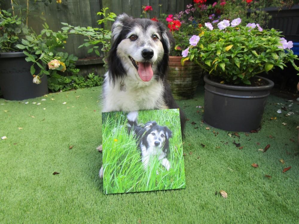 Snapfish dog art.JPG