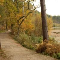 Forest dog walk and cafe, Cheshire - delamere forest dog walks.jpg