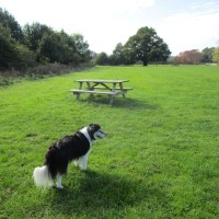 Waterside dog walk near Maidstone, Kent - Kent dog walks and dog-friendly pubs