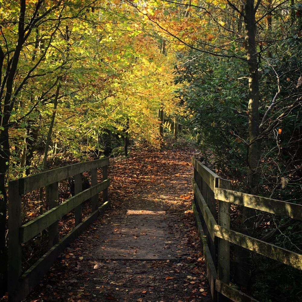 Towneley Park dog walks, Lancashire - EAA9C429-3310-474A-8FAD-6A4F3C88A952.jpeg