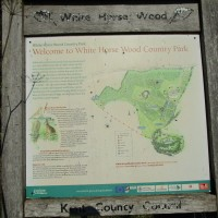 White Horse Wood Country Park dog walk, Kent - Kent dog-friendly pubs with dog walks