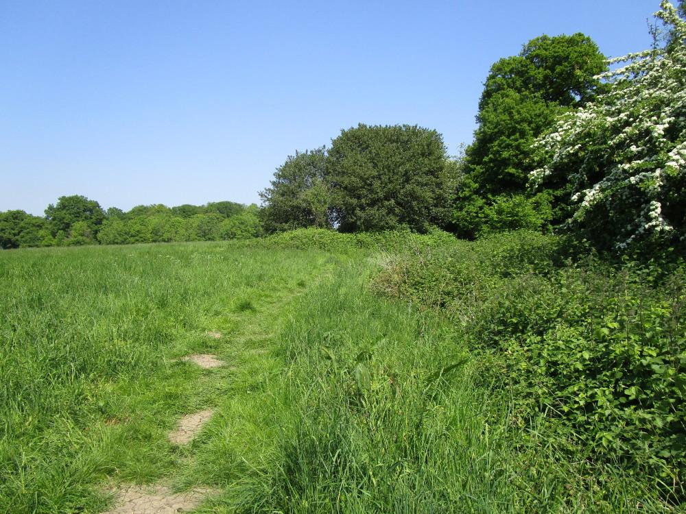 A44 Dog-friendly pub and dog walk near Charlbury, Oxfordshire - Dog walks in Oxfordshire