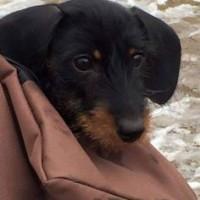 Suzisausagedog - Driving with Dogs