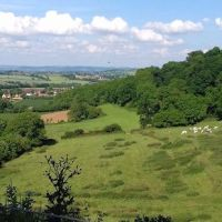 Country park dog walks and pub with a view, Somerset - Somerset dog walk and dog-friendly pub.jpg