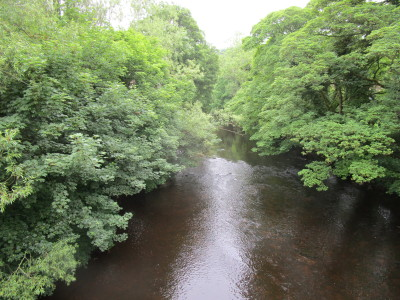 Riverside dog-friendly pub and dog walk, Derbyshire - Driving with Dogs