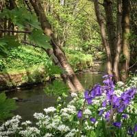 Towneley Park dog walks, Lancashire - 203DA25A-7DC5-478B-A857-867AAAF792EF.jpeg