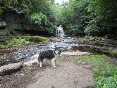 Onto the moors dog walk and dog-friendly pub, Yorkshire - Driving with Dogs
