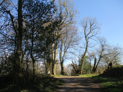 Forest walk from Jacks Castle, Wiltshire - Driving with Dogs