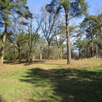 A22 and A26 dog walk in the forest, East Sussex - East Sussex dog walks.JPG