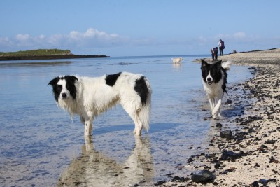 Coral Beach - dog-friendly, Scotland - Driving with Dogs