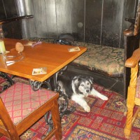 A382 dog-friendly pub with B&B, Devon - Devon dog walk and dog-friendly pub.JPG