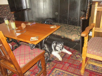 A382 dog-friendly pub with B&B, Devon - Driving with Dogs