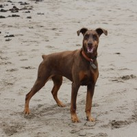 Dolwen Beach- restricted access to dogs, Wales - IMG_6043.JPG