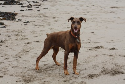 Dolwen Beach- restricted access to dogs, Wales - Driving with Dogs