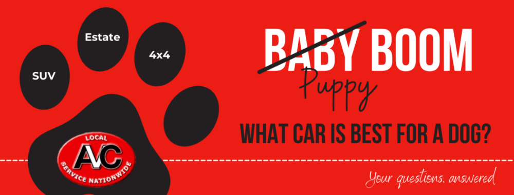 What car is best for a dog?