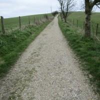 St Roche dog walk near Chichester, West Sussex - Sussex dog walks.JPG