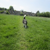 A424 dog walk and pub near Stow, Oxfordshire - dog walks in Oxfordshire