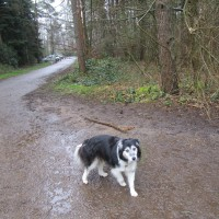 Woodland dog walk near Farnham, Surrey - Surrey dog walk.JPG