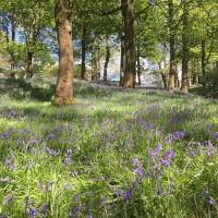 Towneley Park dog walks, Lancashire - 74E2AE40-1A9F-4AED-983C-717EA5DB3E02.jpeg