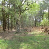 Heathland dog walk near Snape, Suffolk - Suffolk dog walk and picnic stop